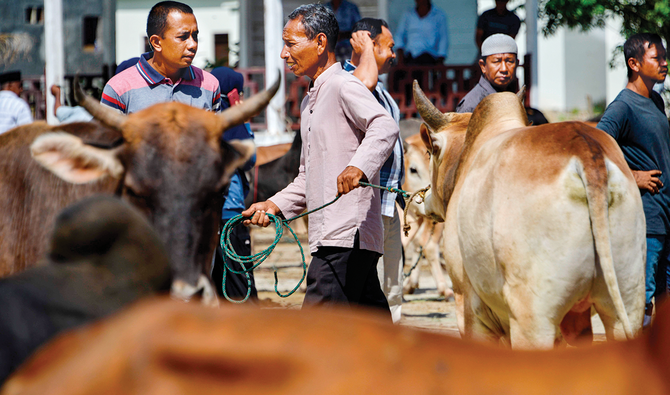 Under the Qurbani-saving program, each participating household is given a choice of animal, a cow or bull, with price ranging between $1,000 and $15,000, depending on its weight and breed. (AFP)